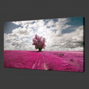 PURPLE LAVENDER FIELD CANVAS PRINT PICTURE