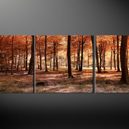 Autumn Forest Landscape Canvas Print
