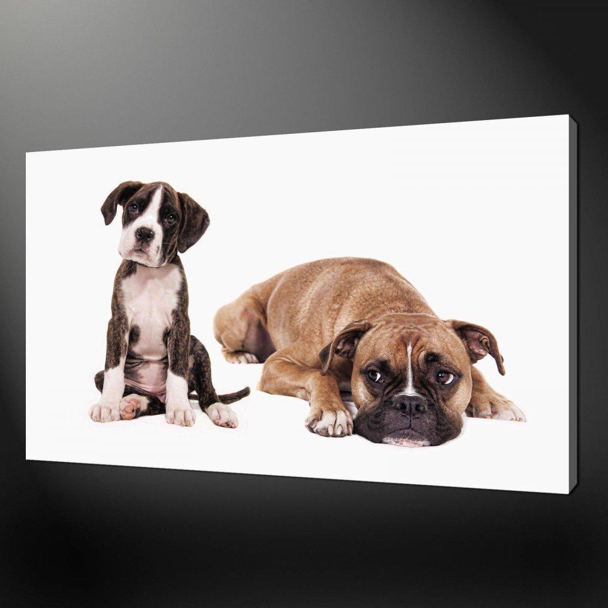 Popular Dog Print WallpaperBuy Cheap Dog Print Wallpaper