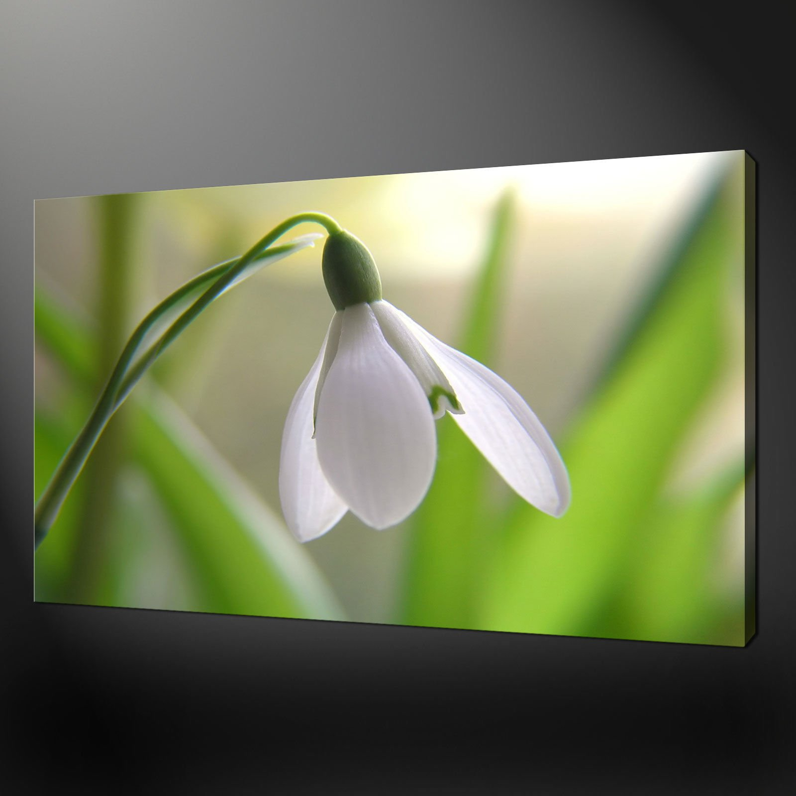Canvas print pictures high quality handmade free next day delivery white flower canvas wall art pictures prints 30 x 20 inch free uk pp mightylinksfo